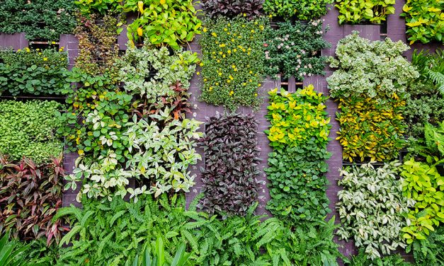 Végétalisation urbaine à Paris, Arcachon et Laval avec Nobilis