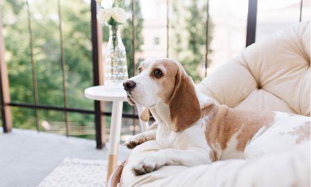 Comment choisir le meilleur panier pour chien ? Le guide ultime !